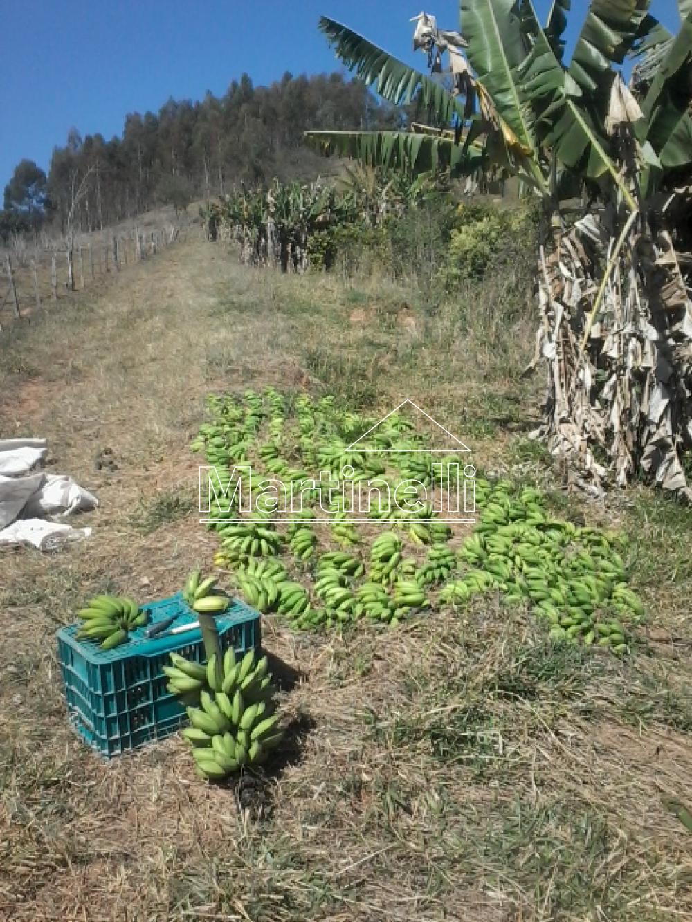 Comprar Rural / Fazendas - Sitios em Caconde apenas R$ 480.000,00 - Foto 8