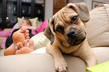 Seis cães perfeitos para quem mora em apartamento