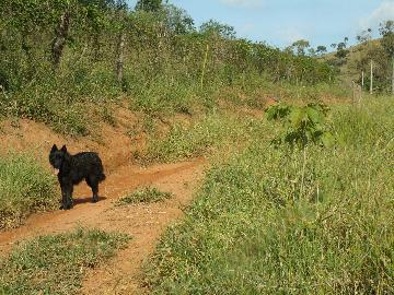 Comprar Rural / Fazendas - Sitios em Caconde apenas R$ 650.000,00 - Foto 4