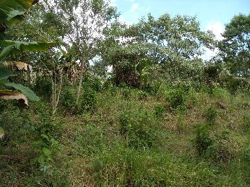 Comprar Rural / Fazendas - Sitios em Caconde apenas R$ 480.000,00 - Foto 9