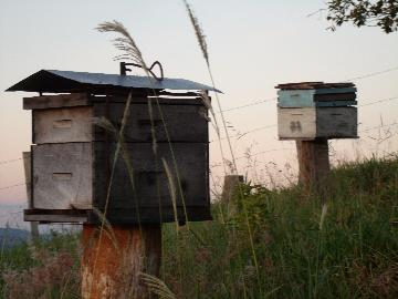 Comprar Rural / Fazendas - Sitios em Caconde apenas R$ 480.000,00 - Foto 10